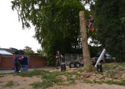 Gallery - Cedar dismantle 11