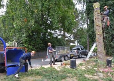 Gallery - Cedar dismantle 14