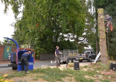 Gallery - Cedar dismantle 15