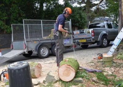 Gallery - Cedar dismantle 19