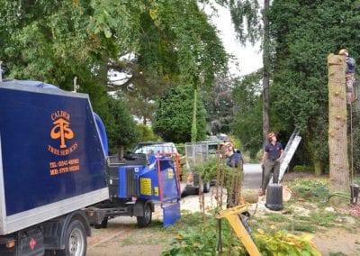 Gallery - Cedar dismantle 21