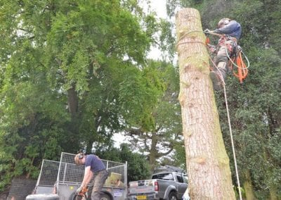 Gallery - Cedar dismantle 24