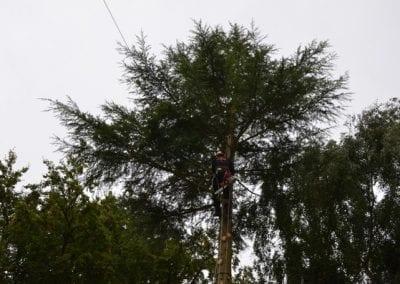 Gallery - Cedar dismantle 3