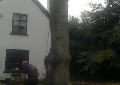 Gallery - Copper Beech Dismantle 4