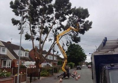 Gallery - Eucalyptus dismantle 1