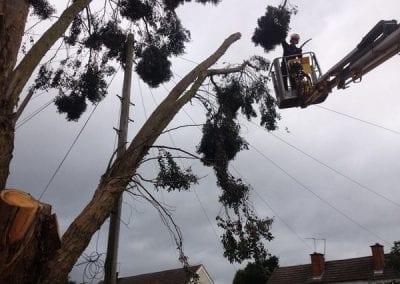 Gallery - Eucalyptus dismantle 2