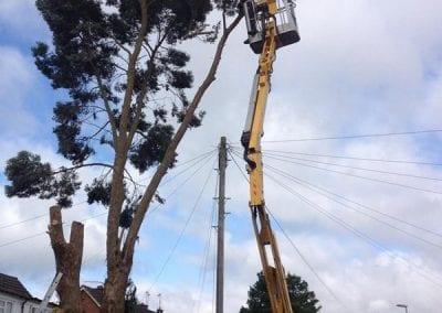 Gallery - Eucalyptus dismantle 3