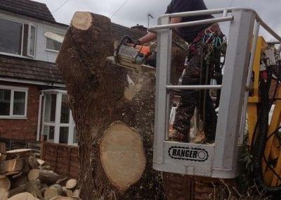 Gallery - Eucalyptus dismantle 5