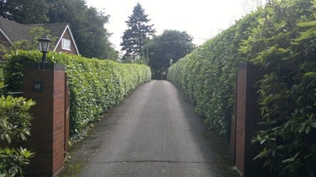 thumb_wsp-26-annual-trim-of-a-laurel-hedge-before