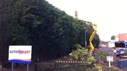 thumb_wsp-30-height-reduction-of-a-leyland-cypress-hedge