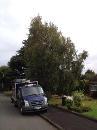wsp-24-crown-reduction-of-a-silver-birch-before
