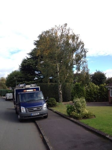 wsp-25-crown-reduction-of-a-silver-birch-after