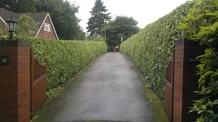 wsp-27-annual-trim-of-a-laurel-hedge-after