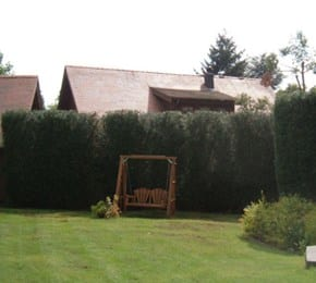 wsp-32-height-reduction-of-a-leyland-cypress-hedge