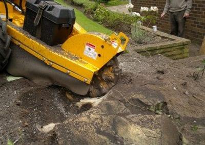 WSP 11 - Stump removal