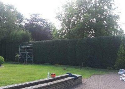 hedge cutting 2
